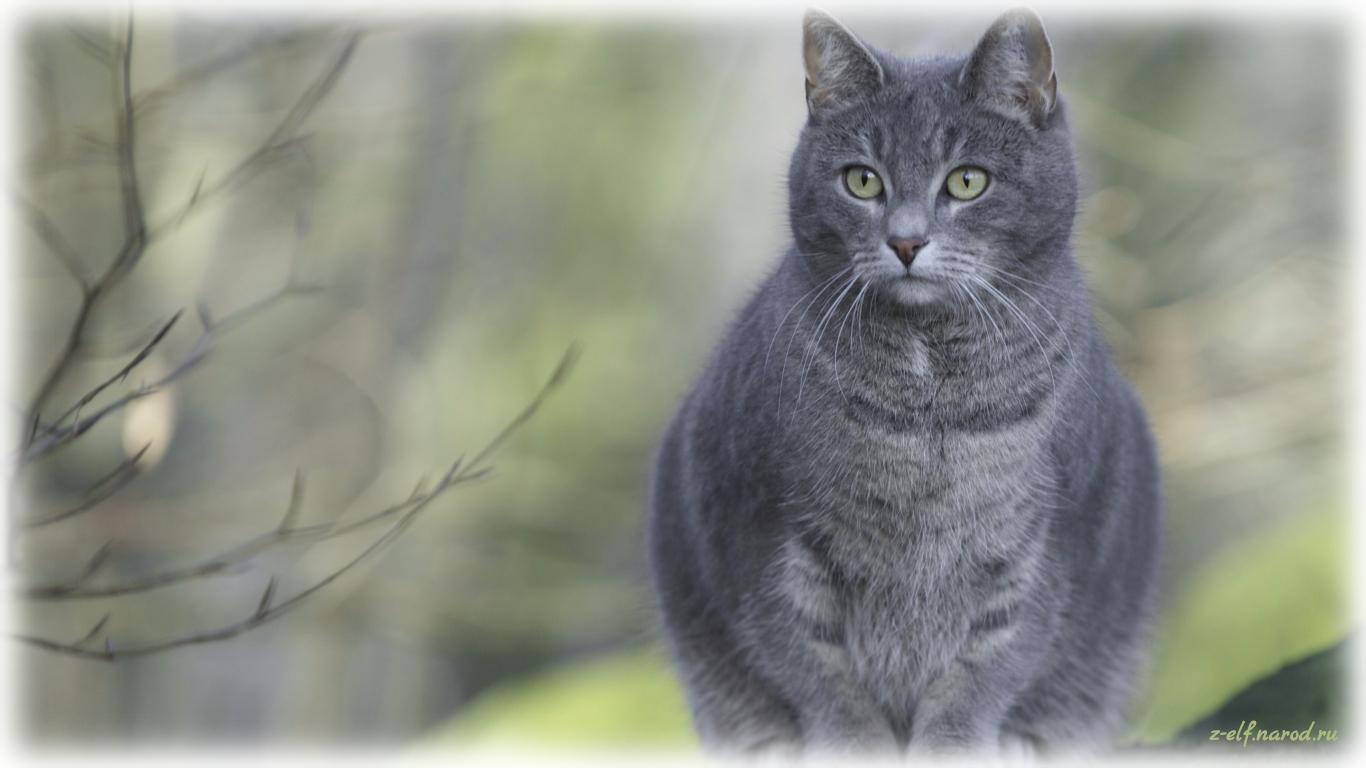 супер кошки, кошки фото, домашние животные кошки, обои кошки, картинки кошек, милые кошки, фотки кошек