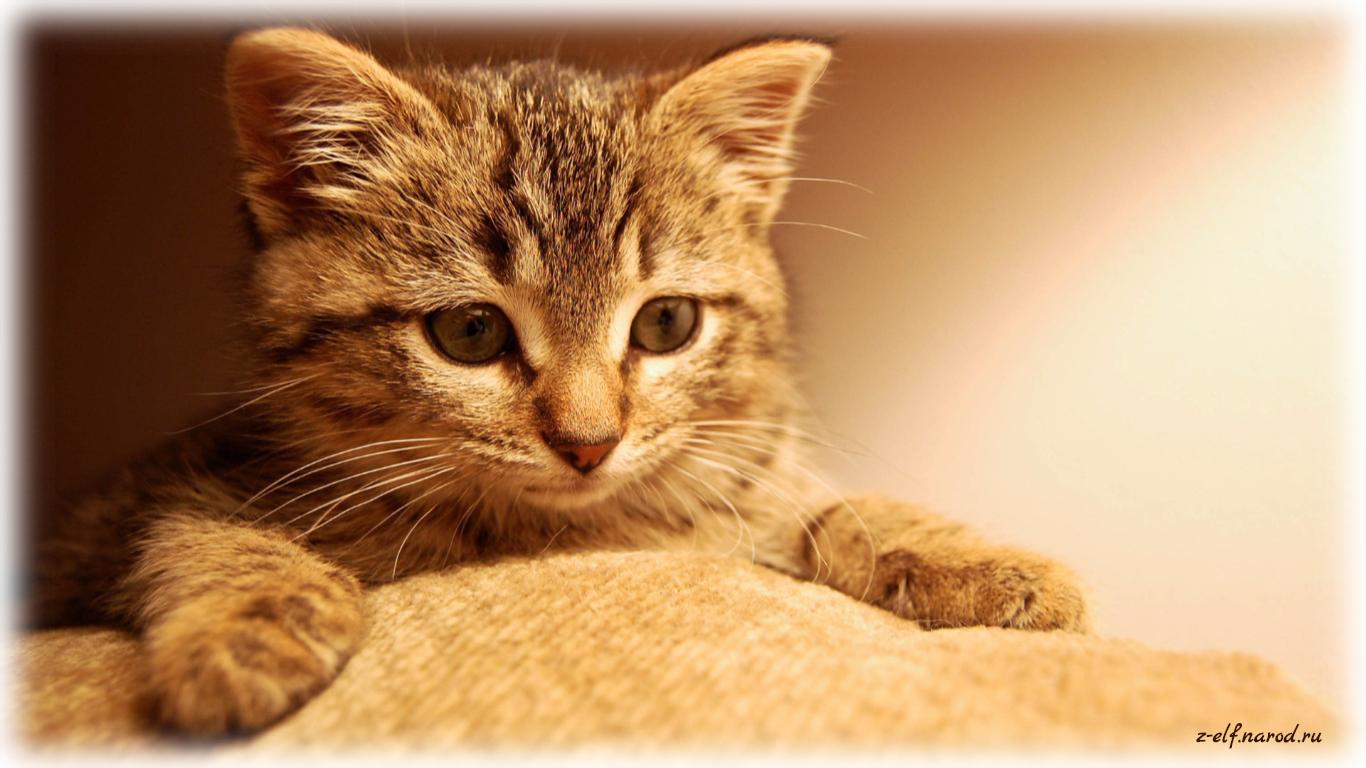 самые красивые кошки, кошки фото, домашние животные кошки, обои кошки, картинки кошек, милые кошки, фотки кошек