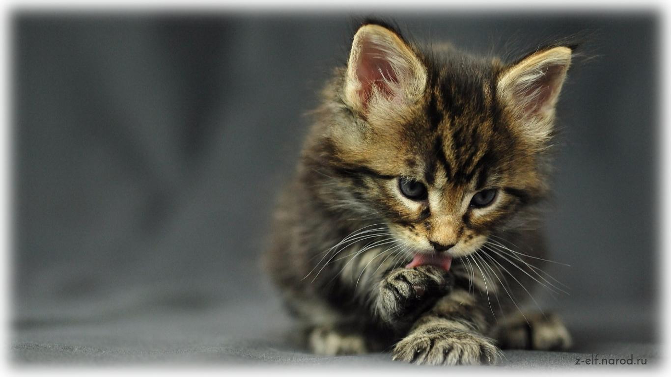 красивые кошки, кошки фото, картинки кошек красивые, обои кошки, картинки кошек, милые кошки