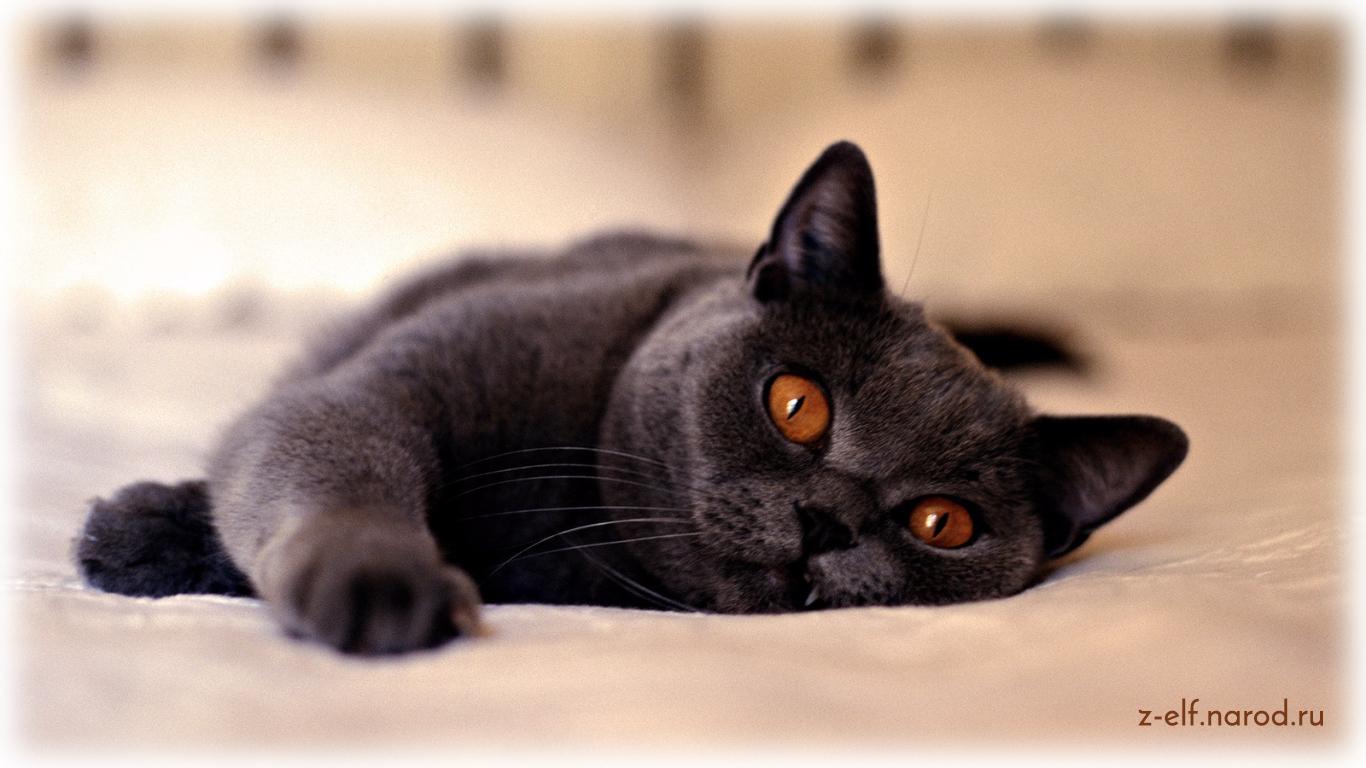 любимая кошка, кошки фото, домашние животные кошки, обои кошки, картинки кошек, милые кошки, фотки кошек