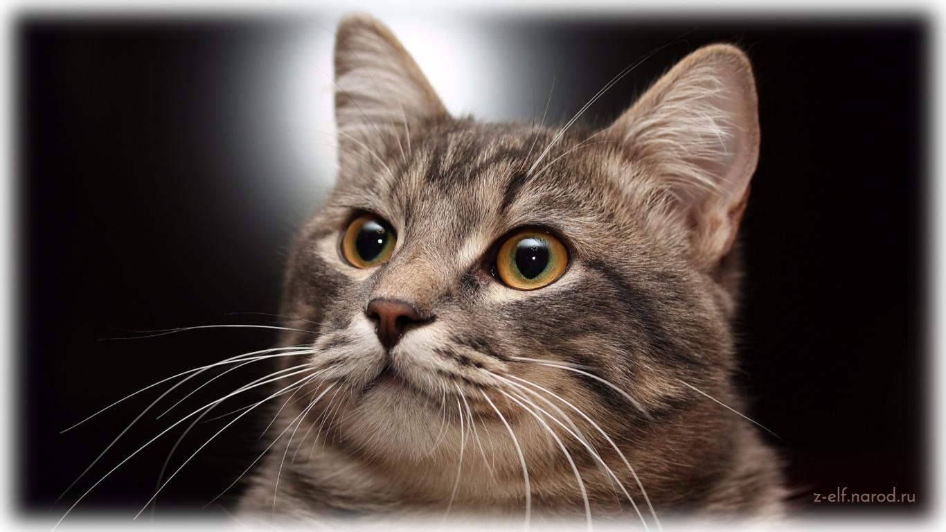 кошки звери, кошки фото, картинки кошек красивые, обои кошки, картинки кошек, милые кошки, фотки кошек