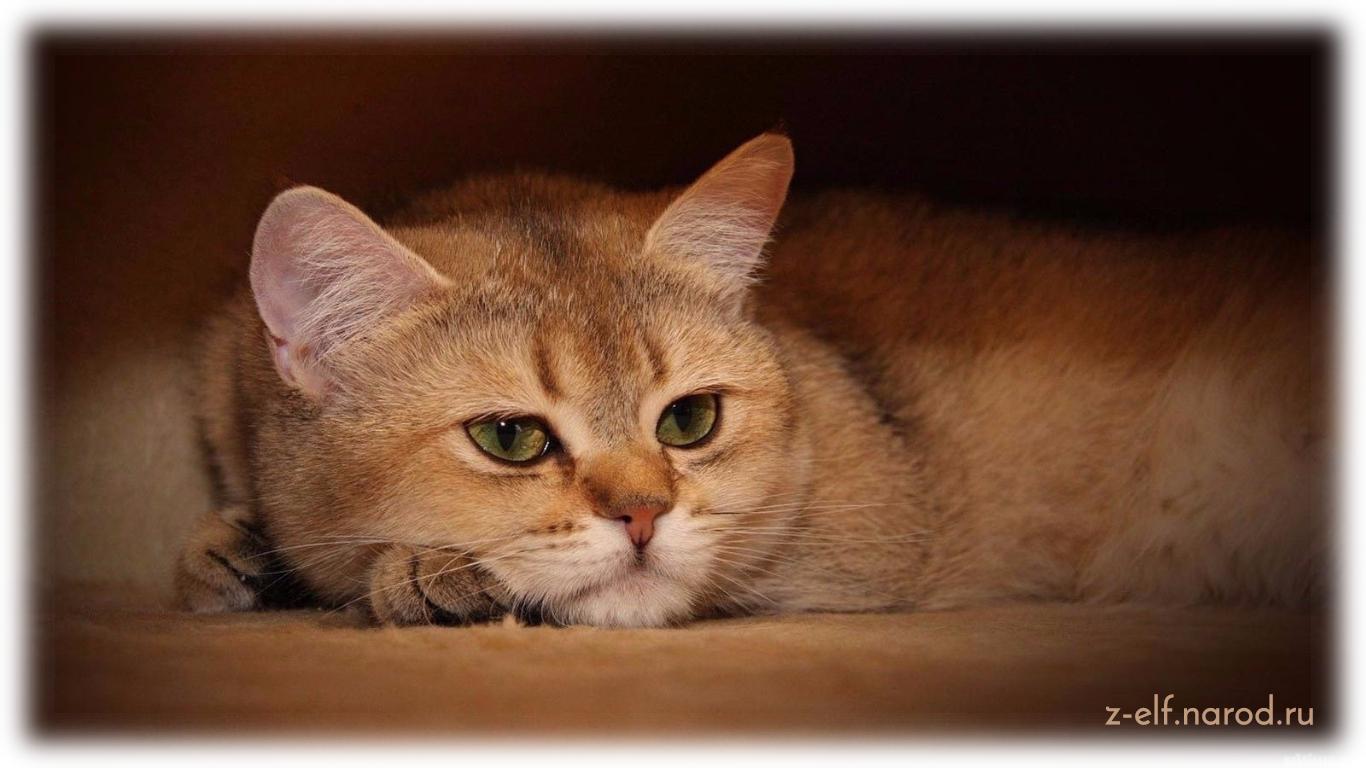 обычная кошка, кошки фото, домашние животные кошки, обои кошки, картинки кошек, милые кошки, фотки кошек