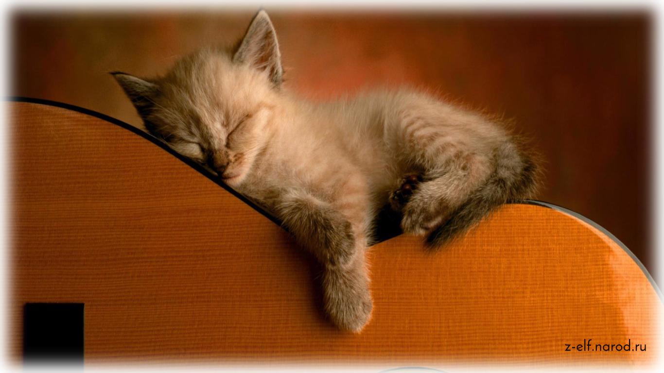питомец кошка, кошки фото, красивые кошки, обои кошки, картинки кошек, милые кошки