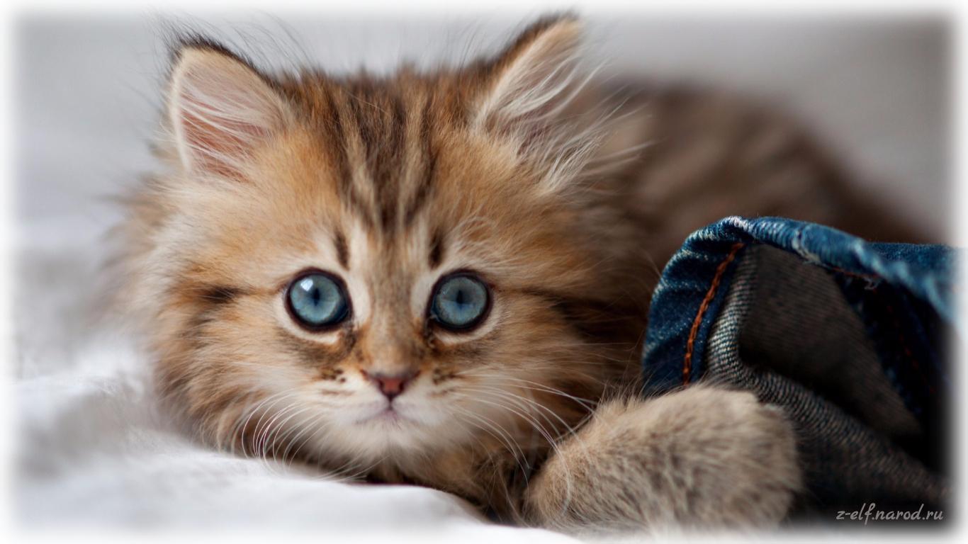 прикольные кошки, кошки фото, картинки кошек красивые, обои кошки, картинки кошек, милые кошки, фотки кошек