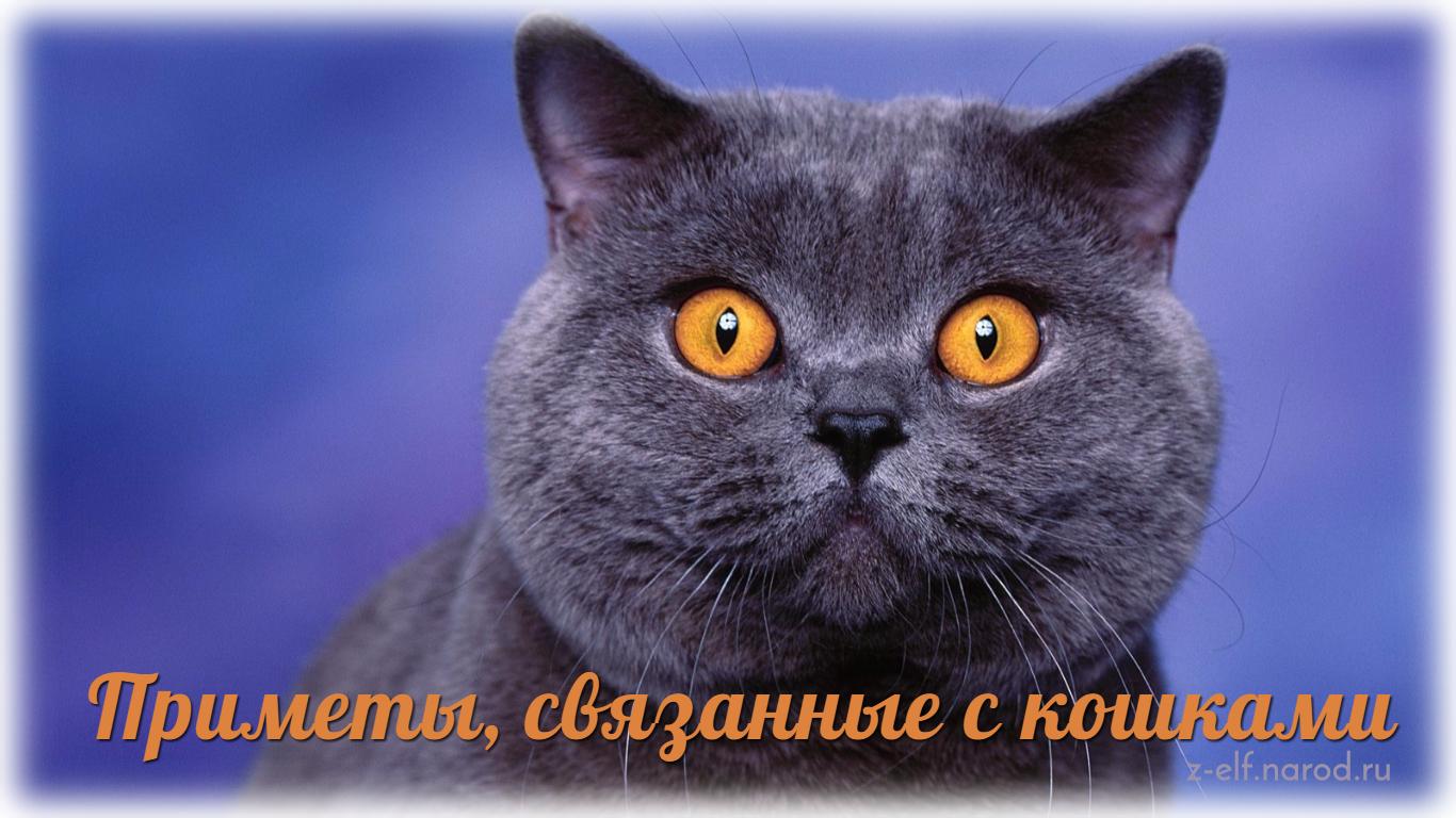 приметы связанные с кошками