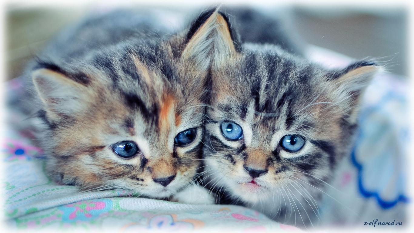 ласковые кошки, обои кошки, язык кошек, смешные кошки фото, картинки кошек